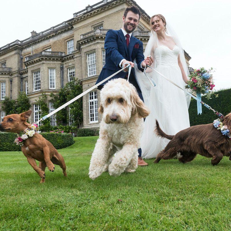 Hedsor House wedding couple walking dogs